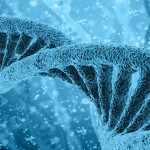 Scientists discover key driver of human ageing