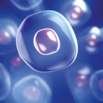 Stem Cells in Aesthetic Medicine  – Clinical Applications and Methods