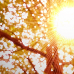 Sunlight offers surprise benefit – it energizes infection fighting T cells