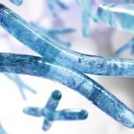 Longer telomeres protect against diseases of aging: A tale of mice and men
