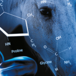Skin rejuvenation with  equine collagen type 1